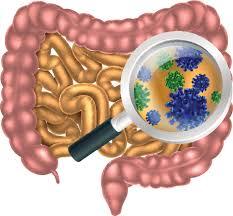 flora-bacteriana